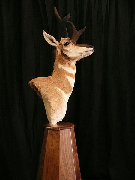 Antelope Pedestal With Floor Base