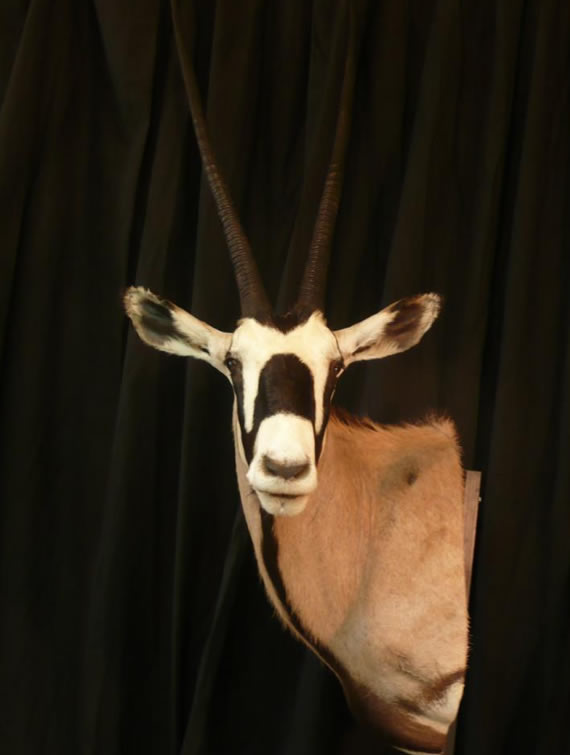 African Taxidermy 7