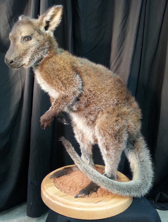 Asian Taxidermy 5