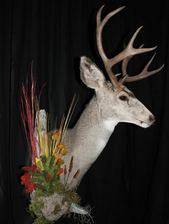 Deer Taxidermy 1