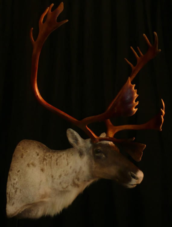 North American Taxidermy 2