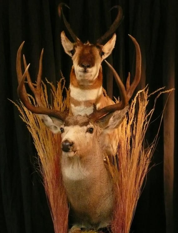 North American Taxidermy