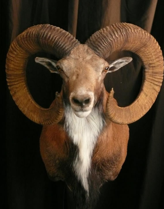 Exotic Taxidermy 1