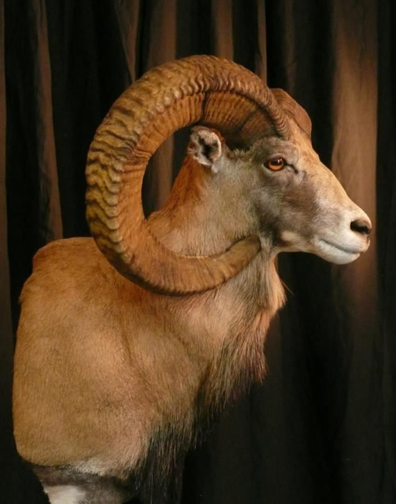 Exotic Taxidermy 2